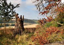 barwy jesieni Zdjęcie Stock