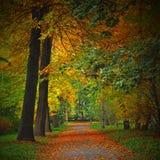 barwy jesieni Obrazy Royalty Free
