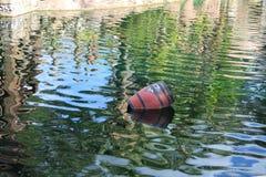 Baryłka w wodzie Obrazy Stock