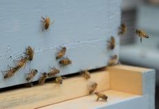 bary pszczoła czyścić nektar ramową pracę Fotografia Royalty Free