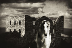 Barzoiwolfjagdhund, der vom Schloss auftaucht Stockbild
