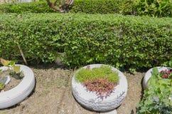 Bas arbuste se protégeant divisant le jardin d'agrément images libres de droits