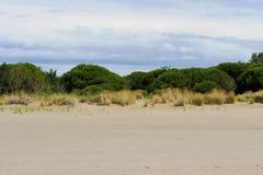 bas arbustes et sable 1 Photos libres de droits