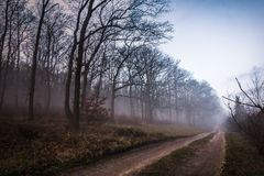 Bas brouillard Photo stock