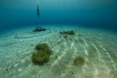Bas de lac l'explorant diver Photos stock