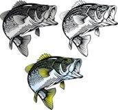Bas geïsoleerde vissen stock illustratie
