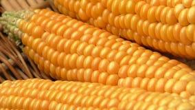 Bas maïs de rendement banque de vidéos