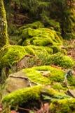 Bas mur rocheux couvert de fin de mousse  photo libre de droits