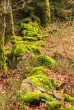 Bas mur rocheux couvert de la mousse photos libres de droits