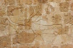 Bas-relief al tempiale mortuario di Hatshepsut. Immagini Stock Libere da Diritti
