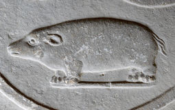 Bas-relief of the animal on the old wall. Stone wall. Sculpture of a pig, a sea swallow or another mammal. Carved very finely and precisely. Four, short paws Royalty Free Stock Image