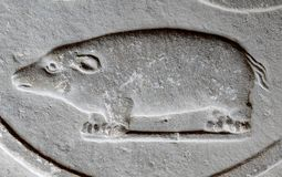 Bas relief Guinea pig, Verona, Italy. Bas relief carving of Guinea pig on stone wall in Verona, Italy stock images