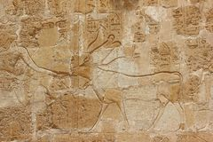 Bas-relief at the Mortuary Temple of Hatshepsut. Royalty Free Stock Images