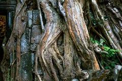 Bas Relief Statue da cultura do Khmer em Angkor Wat imagens de stock royalty free