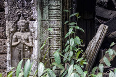 Bas-relief at Ta Prohm temple, Cambodia Royalty Free Stock Images