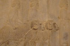 Bas-relief on the wall, Iran Stock Image