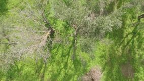 Bas vol au-dessus des arbres banque de vidéos