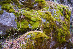 Basalt boulders with moss & lichen Stock Photo