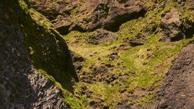 Basalt clif op Reynisfjara-strand dichtbij Vik, Icealnd stock video