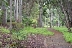 Basalt Gully Park, Mareeba, Queensland - pre-destruction royalty free stock photos