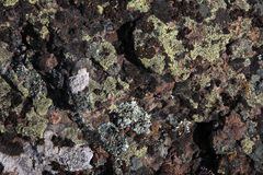 Basalt with Lichen Stock Photography