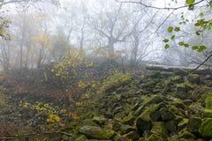 Basalt prisms in the forrest. Basalt prisms in a foggy autumn forrest royalty free stock image