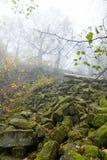 Basalt prisms in the forrest. Basalt prisms in a foggy autumn forrest stock images