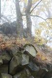 Basalt prisms in the forrest. Basalt prisms in a foggy autumn forrest stock photography