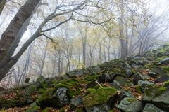 Basalt prisms in the forrest. Basalt prisms in a foggy autumn forrest royalty free stock image