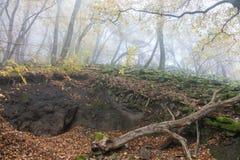 Basalt prisms in the forrest. Basalt prisms in a foggy autumn forrest stock photos