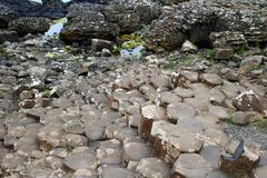 Basalt rocks on the foreshore. At the Giants Causeway in County Antrim in Northern Ireland royalty free stock images
