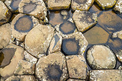 Basalt-tiled seashore of the Giant's Causeway Royalty Free Stock Images