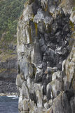 Basaltic cliff in Terceira island coastline. Azores archipelago. Royalty Free Stock Photography