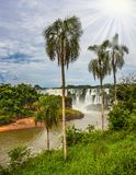 The basaltic ledges. The tropical sun illuminates the seething waters. Waterfalls Iguazu. Picturesque basaltic ledges form the famous waterfalls. The concept of Royalty Free Stock Photos