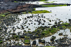 Basaltic shore in Jeju Royalty Free Stock Images