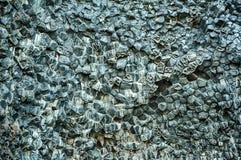 Basaltkolom Stock Afbeelding
