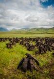 Basamenti del tappeto erboso fotografia stock libera da diritti