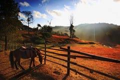 Basamento del cavallo vicino alla rete fissa sulla mattina Immagine Stock