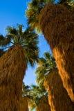 Basamento delle palme Fotografia Stock Libera da Diritti