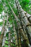 Basamento di bambù Fotografia Stock Libera da Diritti