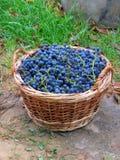 Bascet met druivenblauw Royalty-vrije Stock Afbeelding
