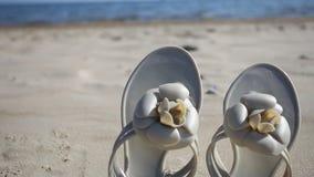 Bascules femelles sur la plage banque de vidéos