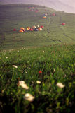 Base camp and wild flowers. In morning sunlight Royalty Free Stock Photography