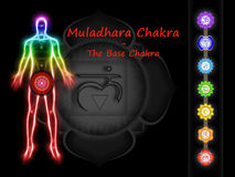 The Base Chakra Stock Photos