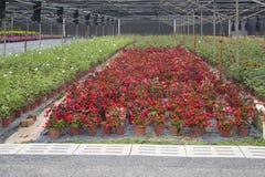 Base colorée d'élevage de fleur dans la vue de parc Photo libre de droits