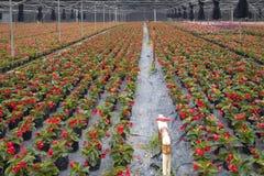 Base colorée d'élevage de fleur dans la vue de parc Photographie stock libre de droits