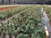 Base d'élevage de fleur en parc Image stock