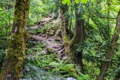 base de árvores musgosos no montanhês imagem de stock royalty free