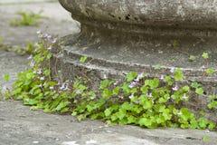 Base de columna Overgrown Imagen de archivo