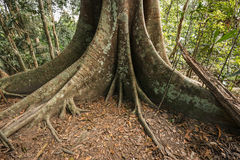 Base de grand arbre Photos stock